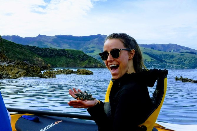 Quail Island Explorer- Lyttleton Shore Excursion