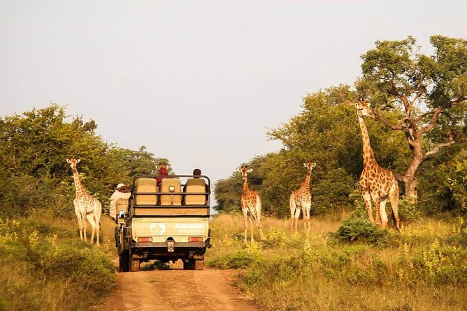Cape Town Private Tour , The best of Big Five Safari photo 1