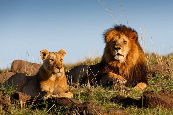 Cape Town Private Tour , The best of Big Five Safari photo 6