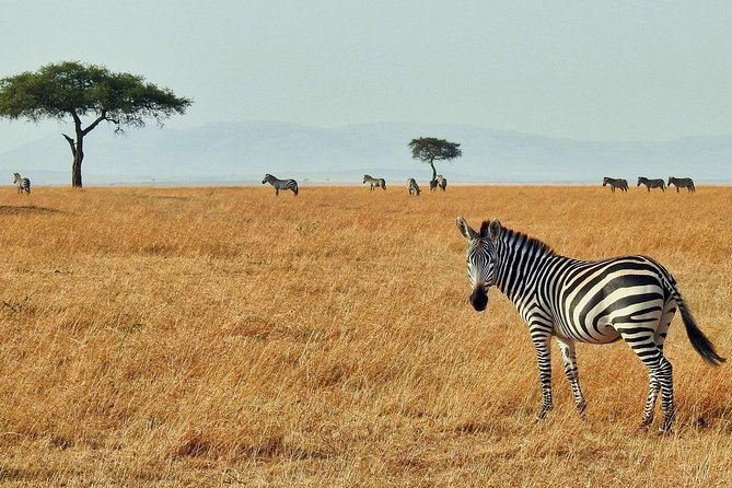 Cape Town Private Tour , The best of Big Five Safari photo 7