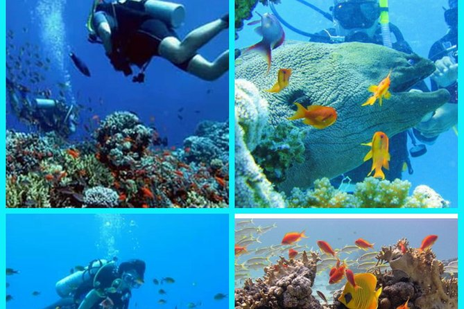 Diving Hurghada – Powered by Egypt Tours Online