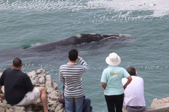 Whale Watching Walking Tours (Land-Based) - OPEN NOW
