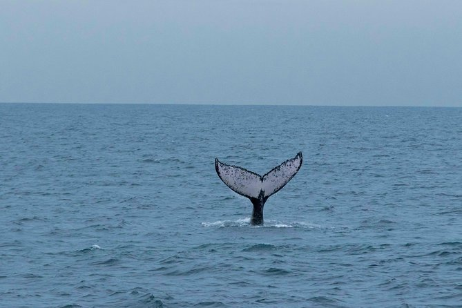 Panama Whale Watching - For Groups 10+ - FREE Transportation & Food - BEST VALUE
