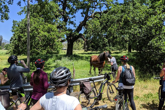Half-Day Sonoma Valley Bike and Wine Tour (E-bike or Regular) photo 4