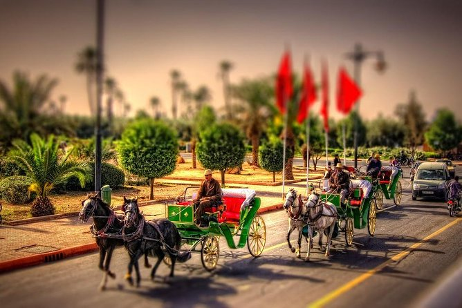 Palm Groves and Gardens by Horse Drawn Cart