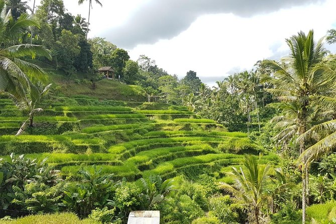 Bali Island Tour with Lunch