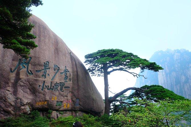 Pine at Huangshan Mountain
