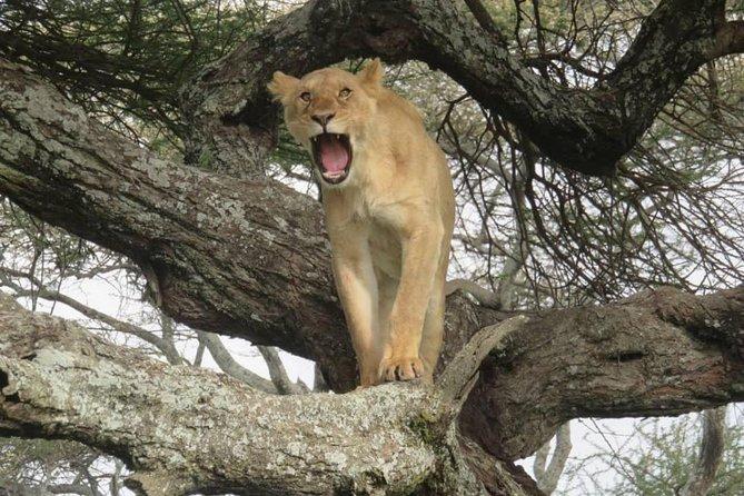 3 days leopard safaris