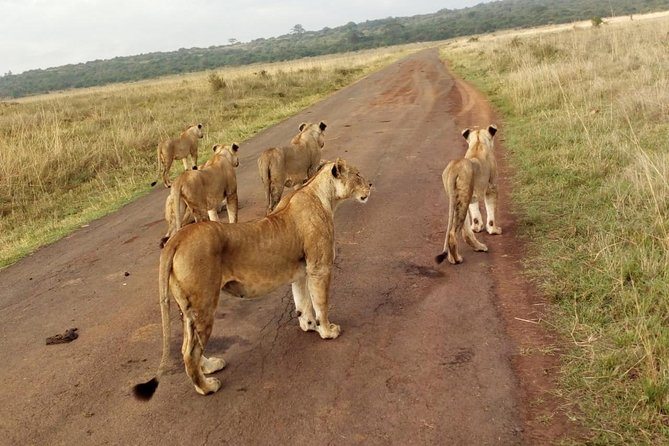 4 Days Masai Mara And Lake Nakuru National Park From Nairobi