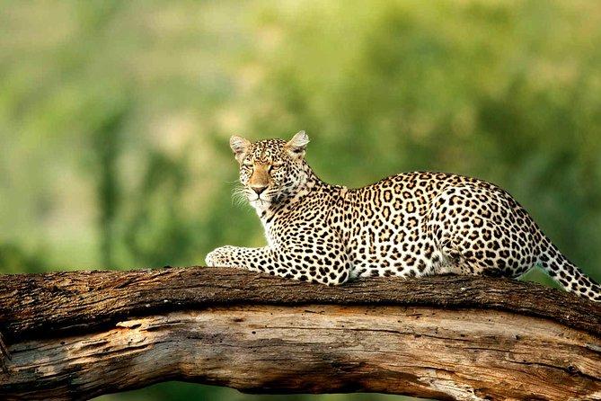 Experience Nature in Serengeti & Ngorongoro Safari