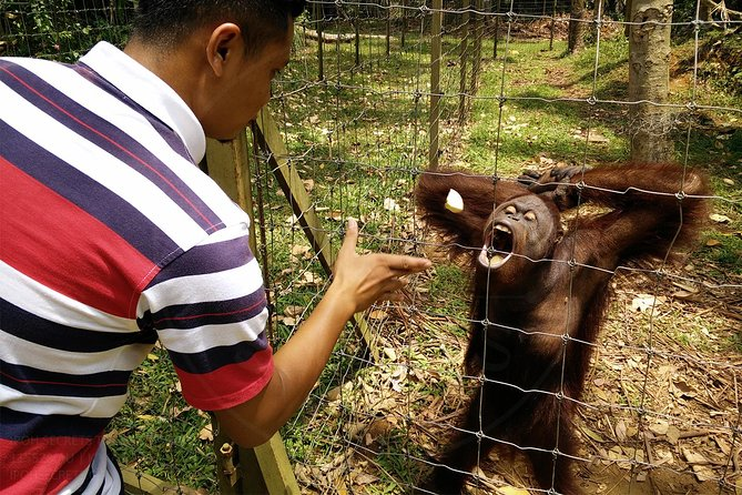 Private Tour: Ipoh Secrets Full Day Heritage & Orang Utan Island