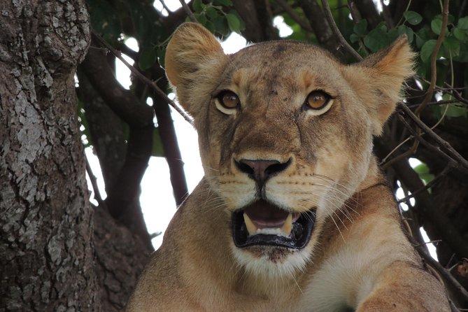 Ruaha Safari (Day Trip)