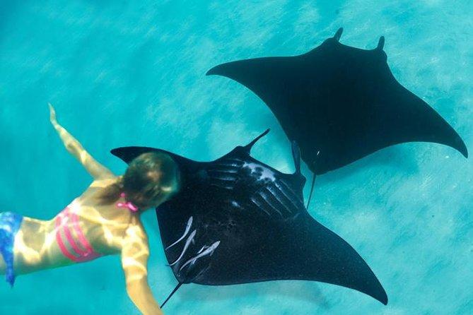Snorkeling Trip Discover Manta Ray in Lembongan Island via Sanur Port