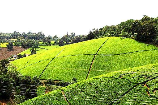 Kiambethu Tea Farm Day Tour from Nairobi