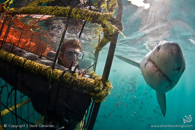 Shack Cage Diving photo 1