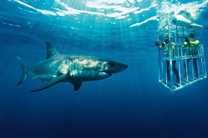 Shack Cage Diving photo 2
