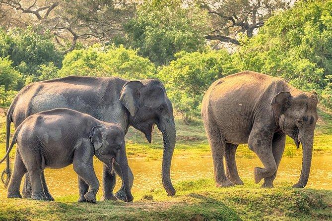 Yala Safari Drive From Ella