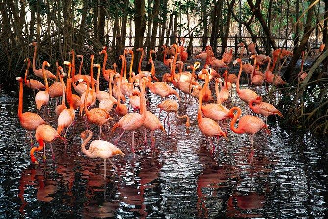 National Aviary Including Playa Blanca Shared Tour