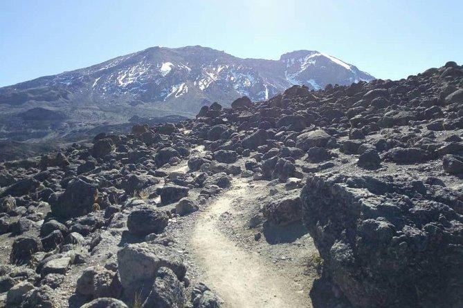 Kilimanjaro 7 Days Trek VIA Machame Route
