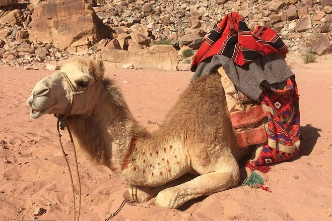 One Day Wadi Rum from Aqaba - Guided Tour