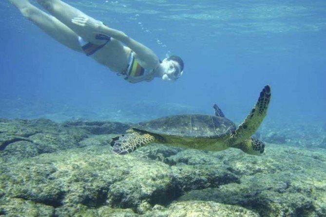Snorkeling With Sea Turtles (polhena Turtle Point) Near Mirissa