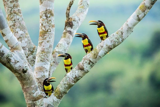 Private Tour to Estancia La Lorenza in Iguazu: Birdwatching & Mate Experience