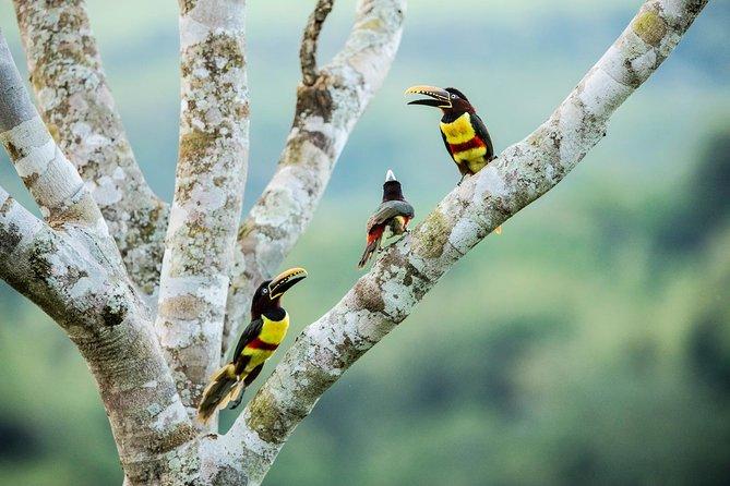 Full Day Private Tour to Estancia La Lorenza in Iguazu: Birdwatching&activities