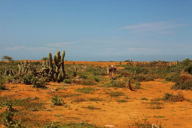 Flash trip through La Guajira | Two days