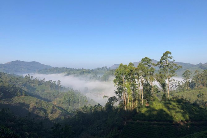 Mountain Hiking Through Munnar Tea plantation photo 7