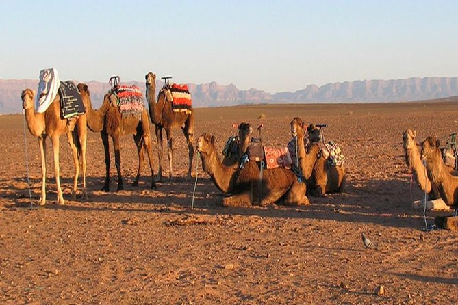 4-Days Holiday package Marrakech and Zagora desert including airport transfers