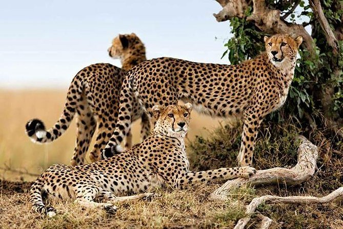 7 Days Budget Camping Safari To See Great Migration