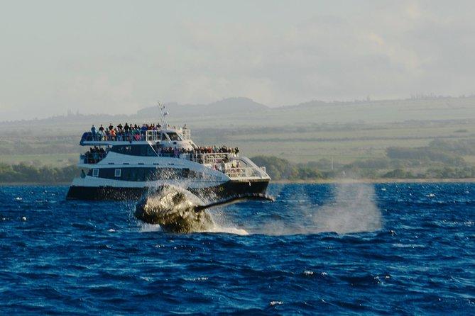 Whale Watching Cruise Aboard Calypso (MAUI / Ma'alaea Harbor)