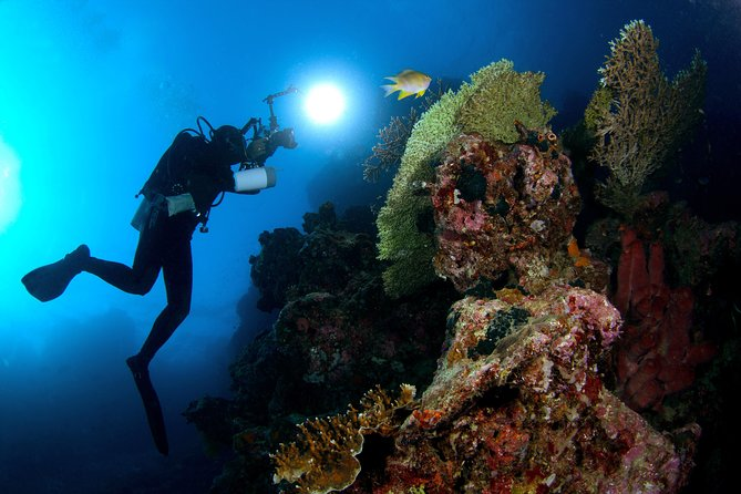 Menjangan 1 Day Diving Trip - For Certified Diver photo 4