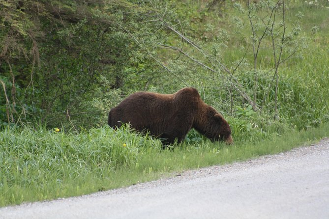 Bear and Wildlife Excursion