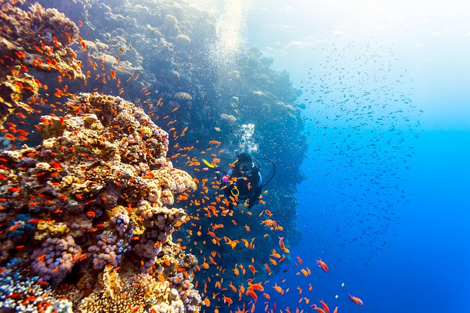 Try Diving in Padang Bai - 1 Day Trip For Beginner