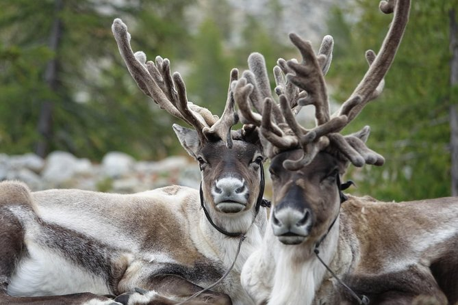 Naadam Festival 8 days and Khuvsgul Lake, Reindeer, Nomadic family