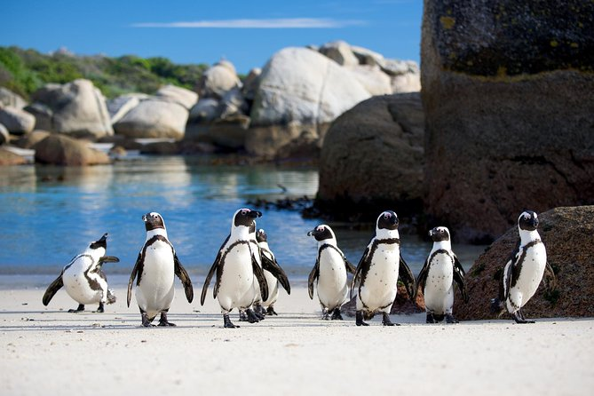 Cape town Private, Cape peninsula and Table Mountain Tour