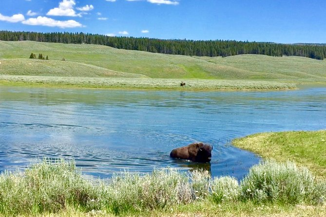 PRIVATE TOUR: The Best of Yellowstone National Park. Picnic lunch included! photo 27