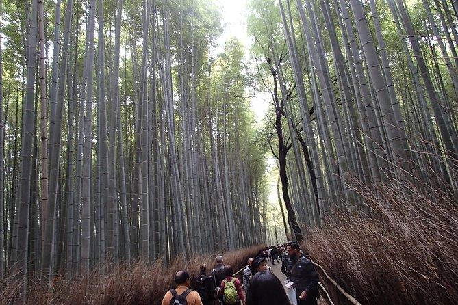 Private 1 Day Kyoto Tour Including Arashiyama Bamboo Grove and Golden Pavillion