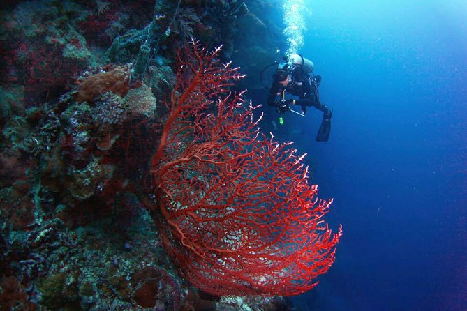 Menjangan 1 Day Diving Trip - For Certified Diver