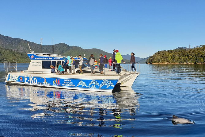 Wildlife Island Sanctuary (Motuara ) and Dolphin Cruise from Picton