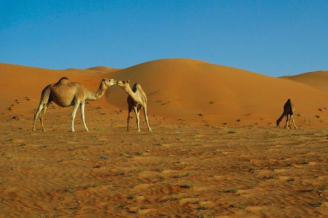 Oman Desert Experience - Wahiba Sands