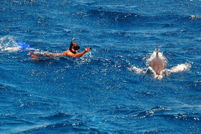 Snorkeling and swimming with dolphins trip