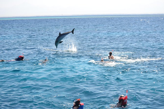 Dolphin House Red Sea Trips