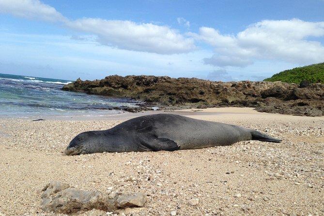 Eco-adventure friendly Aloha Island Tour