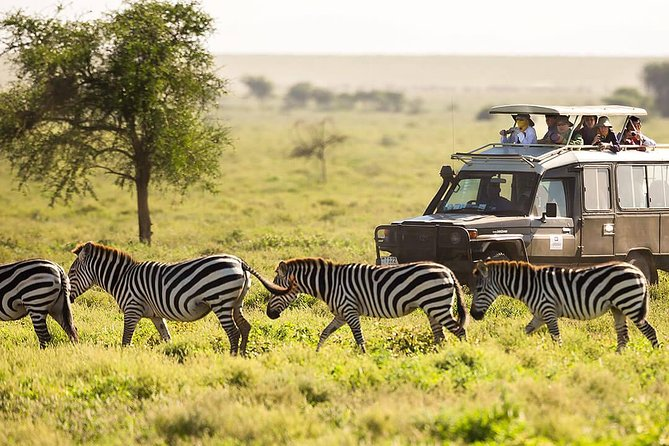 Tour safari packages in uganda and east africa that are affordable a comfortable