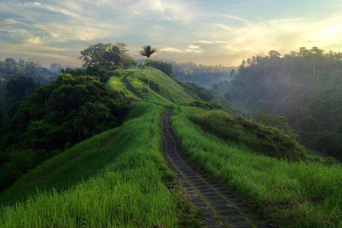 Go on an Eco Walk around Ubud