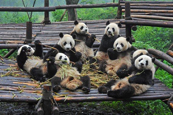 Chengdu en A Day from Shanghai by Air: pandas e historias