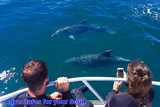 Half-Day Dolphin Viewing Eco-Tour from Picton
