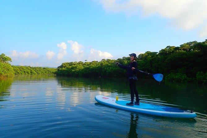 [Ishigaki]SUP/Canoe tour at Natural-Monument-Mangrove-Forest in Ishigaki Island